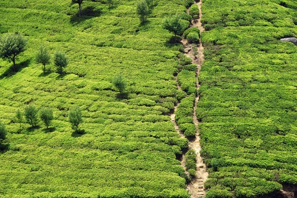 Nature - Circuit Aventure Sri Lankaise - idéal famille Colombo Sri Lanka