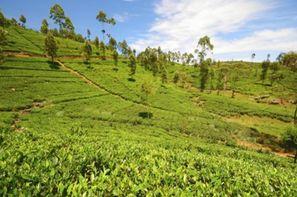 Vacances Colombo: Circuit Indispensable Sri Lanka + ext Beruwela