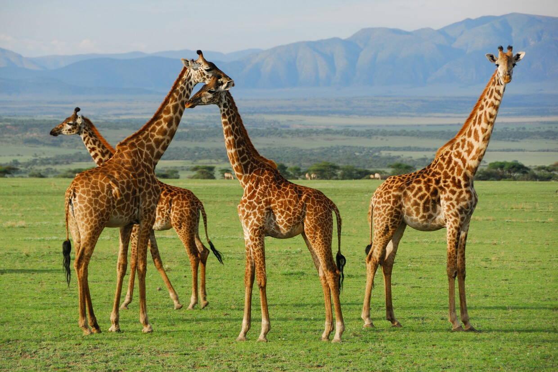 Nature - Circuit Premier regard Tanzanie Arusha Tanzanie