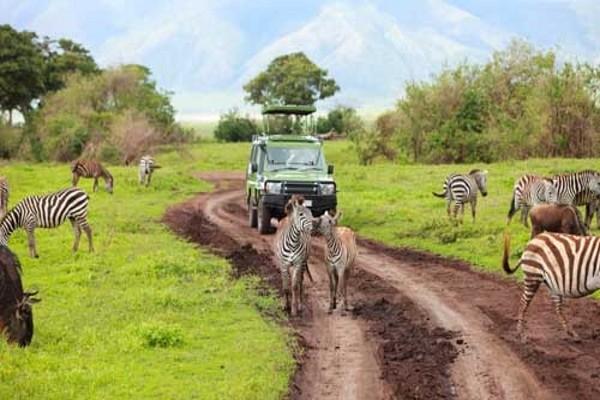 Parc - Circuit Premiers regards Tanzanie + Zanzibar