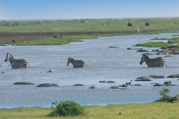 Nature - Circuit Safari Serengeti Arusha Tanzanie