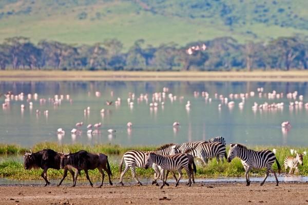 Nature - Circuit Merveilles de Tanzanie & Extension Zanzibar Kilimanjaro Tanzanie