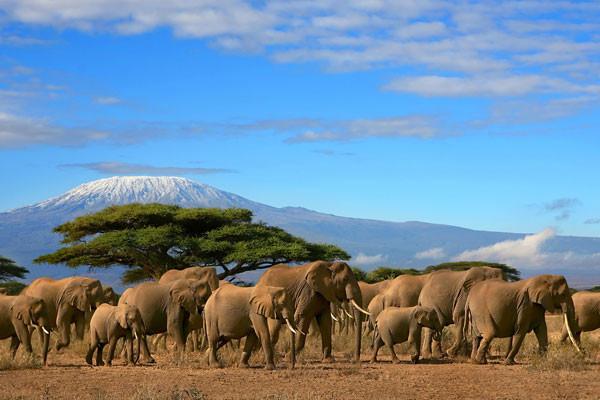 Nature - Circuit Merveilles de Tanzanie Kilimanjaro Tanzanie