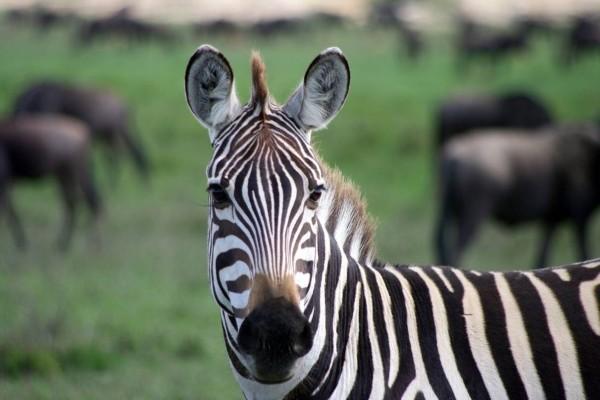 Nature - Circuit Splendeurs de Tanzanie Kilimanjaro Tanzanie