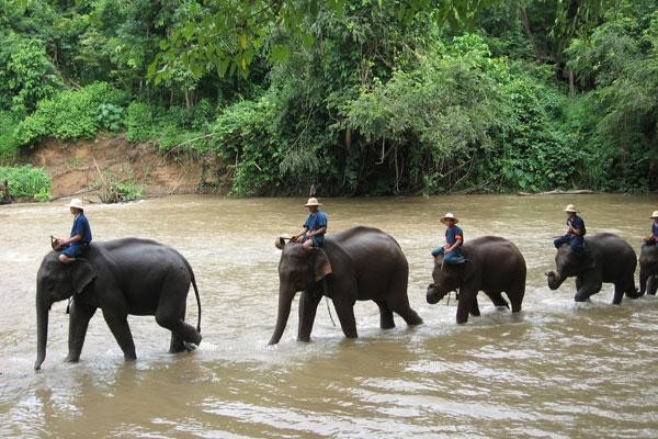 Nature - Les Essentiels de la Thaïlande & farniente à Krabi au Deevana Plaza 4* Krabi Thailande
