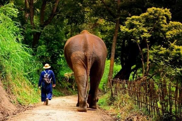 Nature - Les Essentiels de la Thaïlande & farniente à Cha Am au Grand Pacific Sovereign 4* Bangkok Thailande