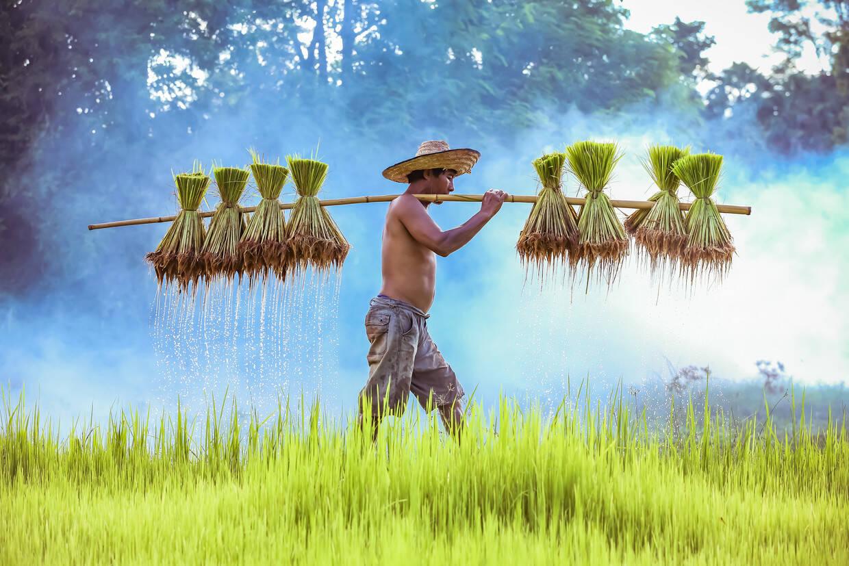 Nature - Les Essentiels de la Thaïlande & farniente au Nature Phuket 5* Phuket Thailande