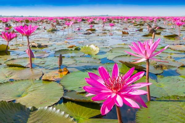 Nature - Circuit Lotus de Thaïlande en mini groupe 4* Bangkok Thailande