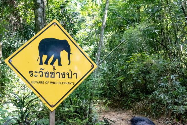 Nature - Circuit De la Jungle de l'Eléphant Hills aux Sables de Khao Lak Bangkok Thailande