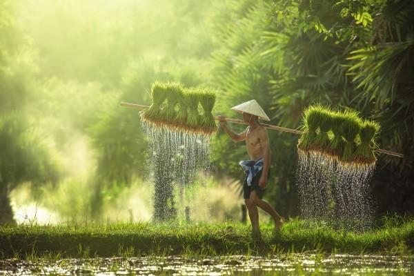 Les Essentiels de la Thaïlande & farniente au Nature Phuket