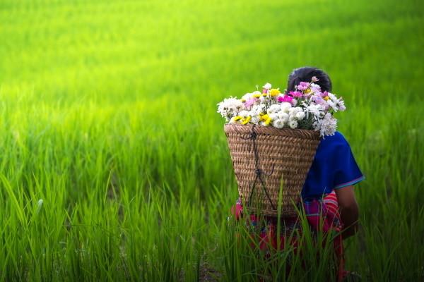 Nord de la Thailande