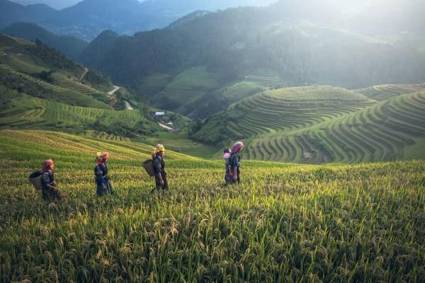 Nature - Circuit Splendeurs de la Thaïlande & extension Cha Am Bangkok Thailande