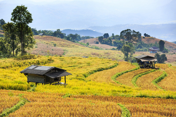 Nature - Circuit Richesses et Traditions de Thaïlande & extension Cha Am Bangkok Thailande