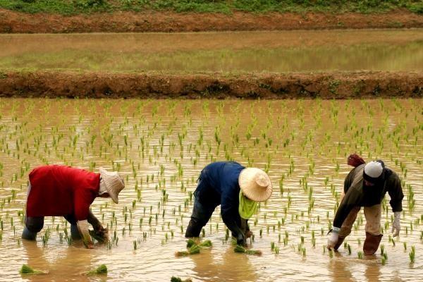 Nature - Les Essentiels de la Thaïlande & farniente à l'Amari Hua Hin 4* Bangkok Thailande
