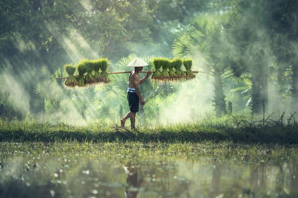 (fictif) - Circuit Magie du Vietnam Cambodge 3* Hanoi Vietnam