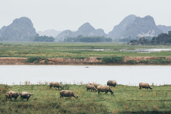 Nature - Circuit Vietnam Insolite