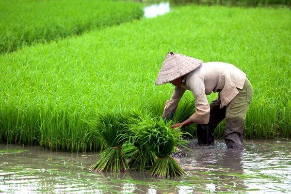 Vietnamienne Douche