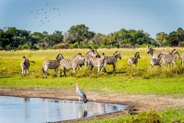 Nature - Circuit Impressions du Botswana Victoria Falls Zimbabwe