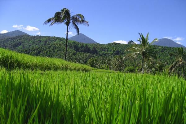 Nature - Combiné hôtels - Bali, l'île des Dieux 3* Denpasar Bali