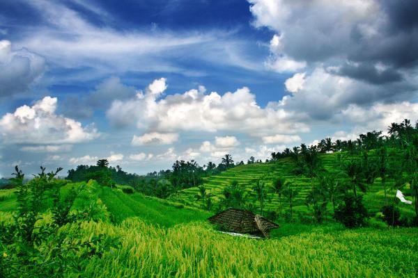 Nature - Combiné hôtels - Bali, l'île des Dieux et ses plages 3*