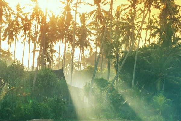 Nature - Combiné hôtels - Bali, l'île des Dieux 4* Denpasar Bali