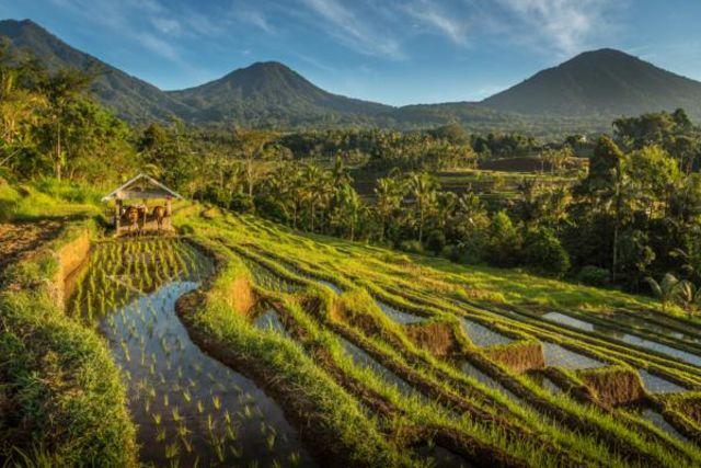 Fram Bali : hotel Combiné hôtels Des rizières d'Ubud aux plages de Sanur - Denpasar