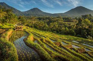 Vacances Denpasar: Combiné hôtels Des rizières d'Ubud aux plages de Sanur