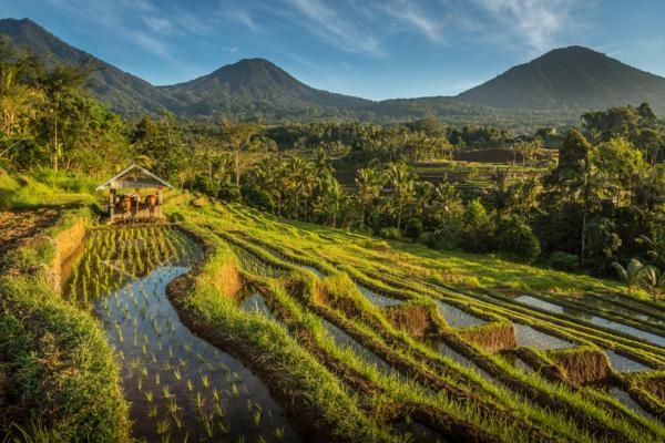 Nature - Combiné hôtels Des rizières d'Ubud aux plages de Sanur 4* Denpasar Bali