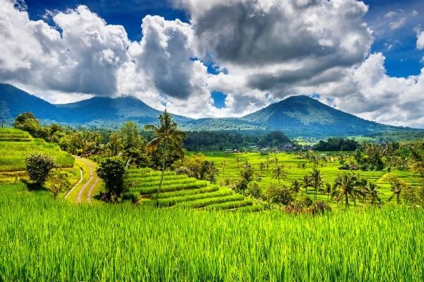 Nature - Hôtel Element by Westin Ubud / Holiday Resort Lombok / Kings Villa Sanur 4* Denpasar Bali