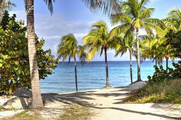 Nature - Combiné hôtels Charmes de La Havane et plages de Varadero (Melia Habana + Sol Palmeras) 4* La Havane Cuba