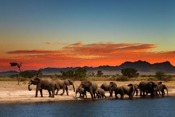 (fictif) - Hôtel Combiné Séjour Diani Sea Resort / Safari Tsavo-Amboseli 4* Mombasa Kenya