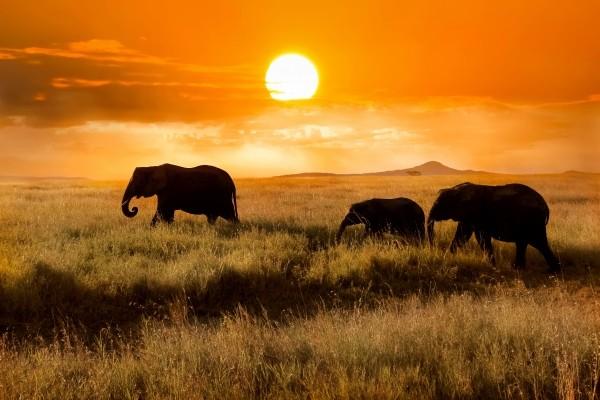 (fictif) - Combiné circuit et hôtel Safari et plage de l'océan indien - 3 nuits Tsavo/Amboseli Mombasa Kenya