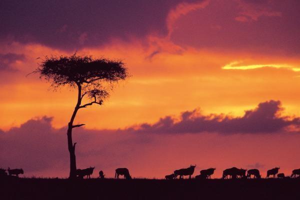 Autres - Hôtel Combiné Séjour Diani Sea Resort / Safari Tsavo-Amboseli 4* Mombasa Kenya