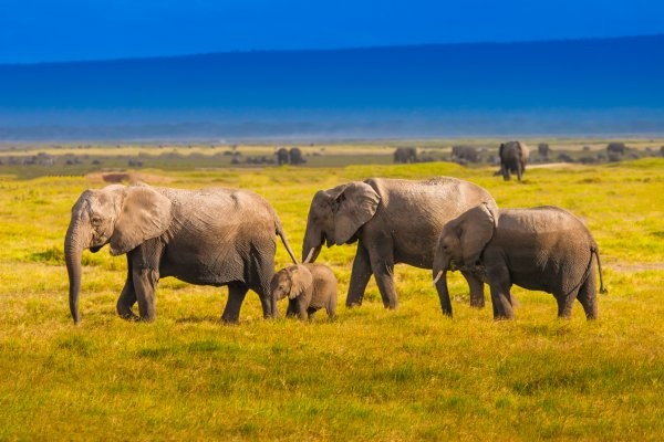 Nature - Combiné circuit et hôtel Safari et plage du Framissima Watamu - 3 nuits Tsavo/Amboseli Mombasa Kenya
