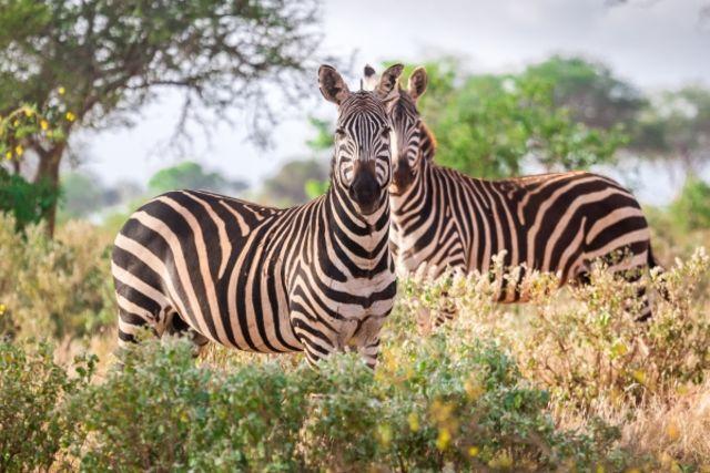 Fram Kenya : hotel Combiné circuit et hôtel Safari et plage de l'océan Indien - 1 nuit Tsavo Est - Mombasa