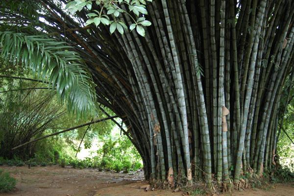 Nature - Combiné circuit et hôtel Sri Lanka Authentique + Maldives au Royal Island Colombo Sri Lanka