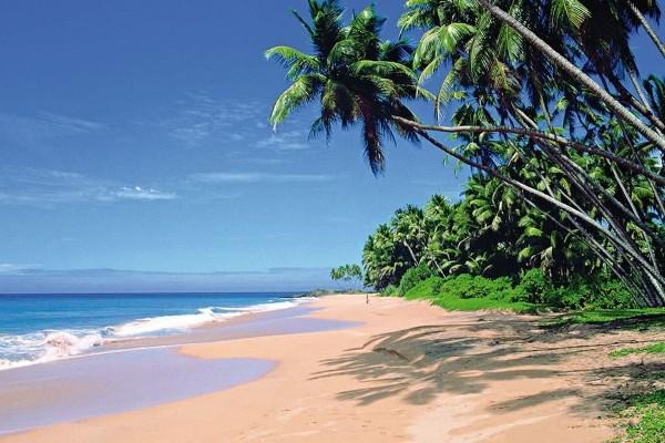 Plage - Combiné circuit et hôtel L'Île Merveilleuse 3* & extension à l'hôtel The Palms 4* Colombo Sri Lanka