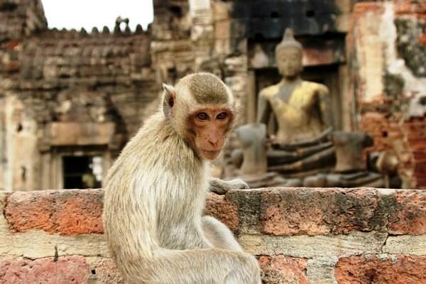 Singe temple lobpuri