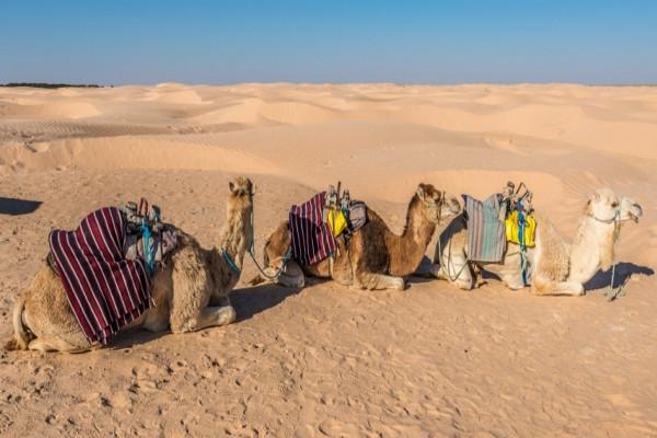Nature - Combiné circuit et hôtel Combiné Splendeurs du Sud + Aladin 3* Djerba Tunisie