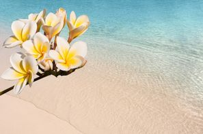 Vacances Pointe A Pitre: Croisière Costa Magica - La Magie des Caraïbes