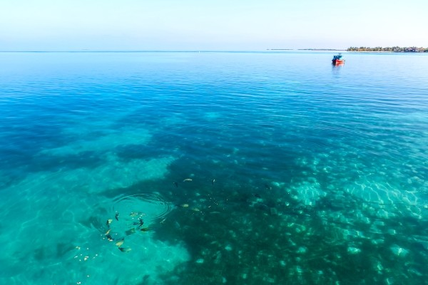 Fonds marins - Maldives Dream Baa & Raa