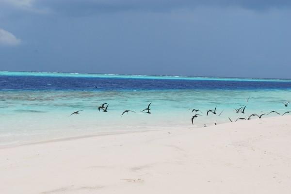 Plage - Croisière A la voile Maldives Dream Premium Male Maldives
