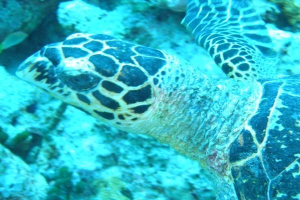 Nature - Croisière A la voile Maldives Dream Premium Male Maldives