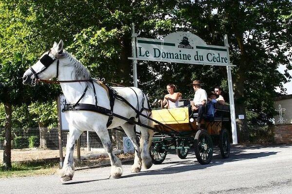 null - maeva Escapades Le Domaine du Cèdre Rivières France Languedoc-Roussillon