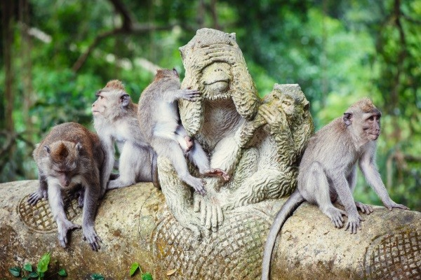 Nature - Amatara Royal Ganesha Ubud/Away Bali Legian 4*