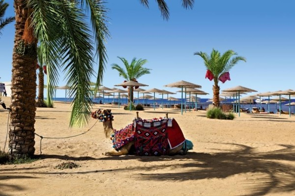 Plage - Hôtel Three Corners Sunny Beach Resort 4* Hurghada Egypte