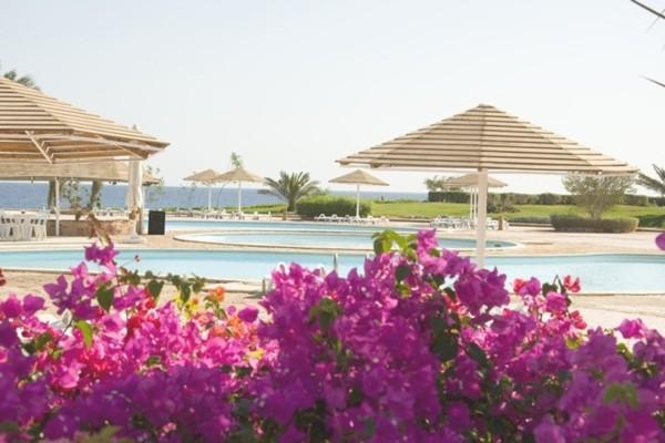 Piscine - Hôtel Three Corners Equinox Resort 4* Marsa Alam Egypte