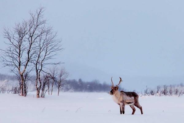 Nature - Club Marmara Ivalo 3* Ivalo Finlande