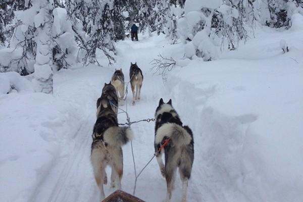 Nature - Hôtel Sirkantahti 3* : Réveillon en Laponie ! Kittila Finlande