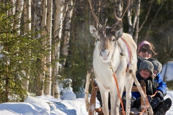 hôtel - activites - Hôtel Séjour Activités Grand Nord à l'hôtel Yllas Rinne 3* sup Kittila Finlande
